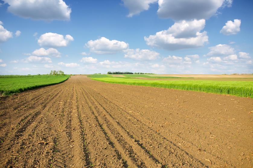 Conheça 4,500 anos de proteção das plantas