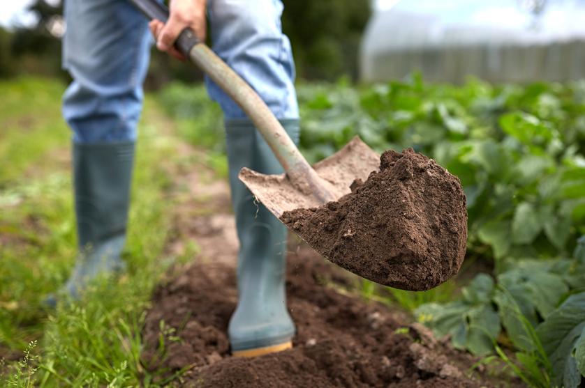 Zonas rurais determinantes para a produção alimentar