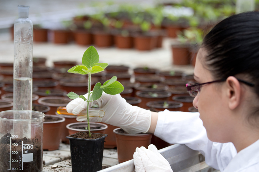 Glifosato: 3300 estudos já feitos atestam segurança deste herbicida