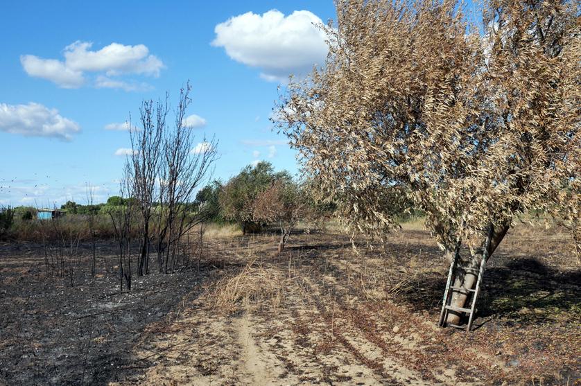 Segurança Social apoia agricultores afetados pelos incêndios