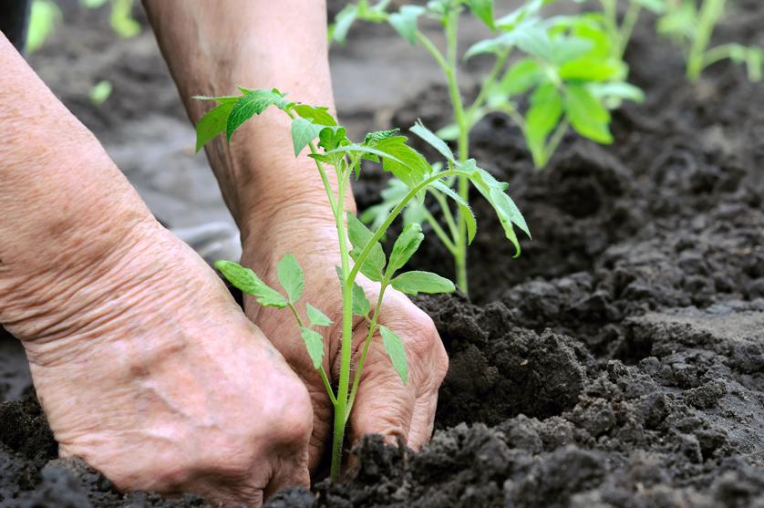 Os alimentos orgânicos não são mais saudáveis, diz estudo norte-americano.